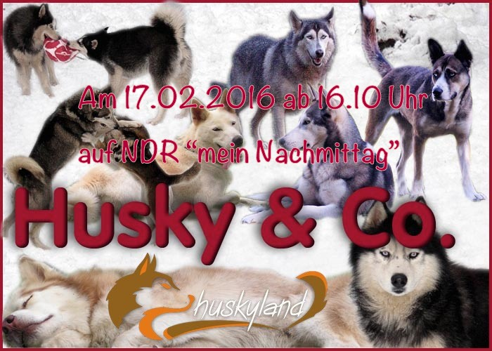 Husky_Collage2